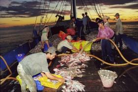 Vietnam making headways in fight against IUU fishing