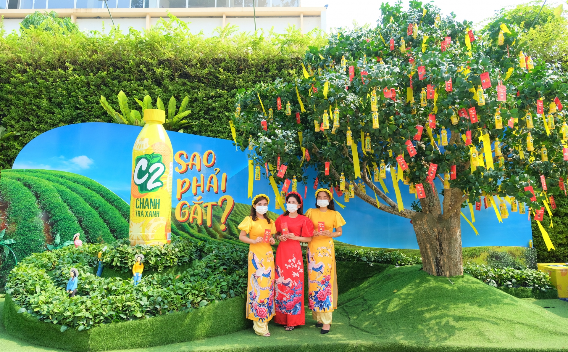 giant ancient tea tree becomes spotlight for tet festival 2021