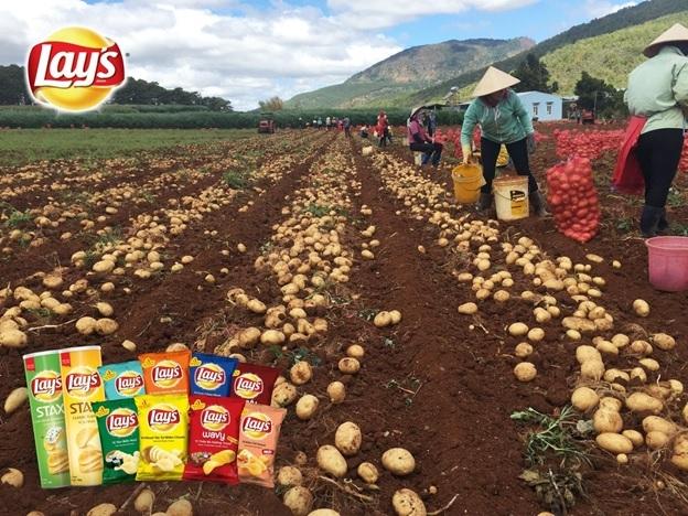 pepsico foods vietnam expands international quality potato cultivation project