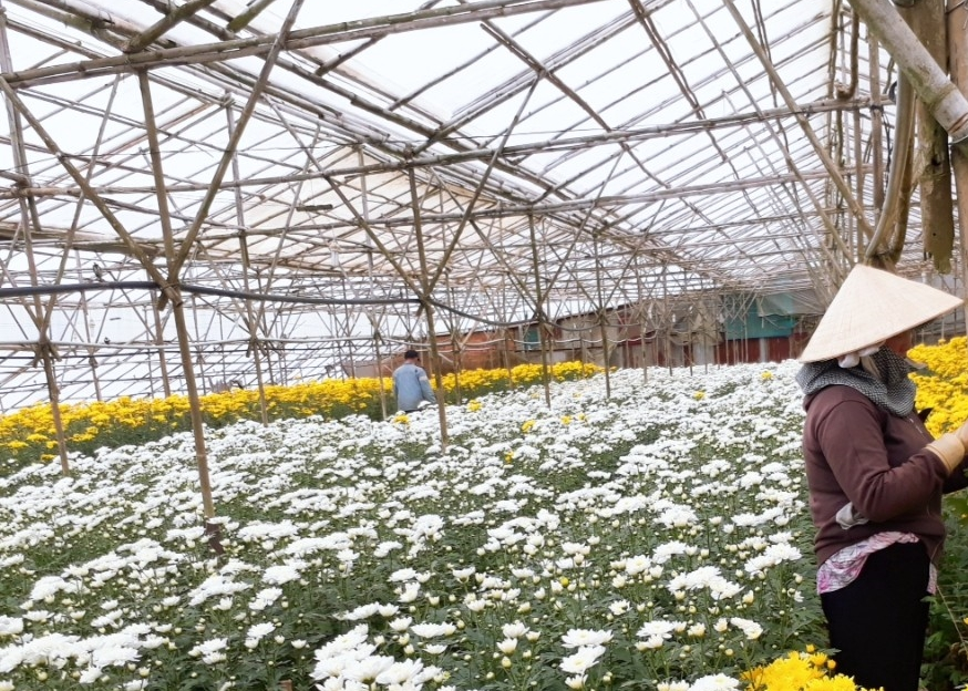 basfs light stabiliser for greenhouse films helps vietnamese farmers