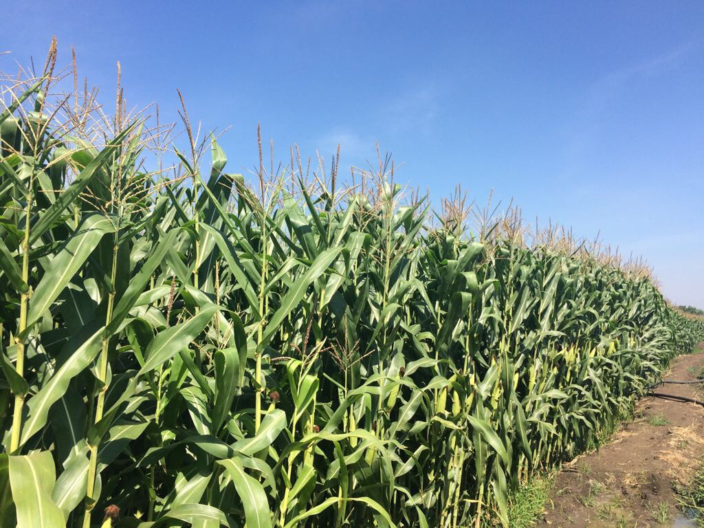 GMO controversy: communication is key