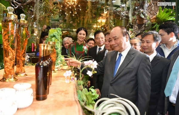 local government boosting promotional activities on ngoc linh ginseng