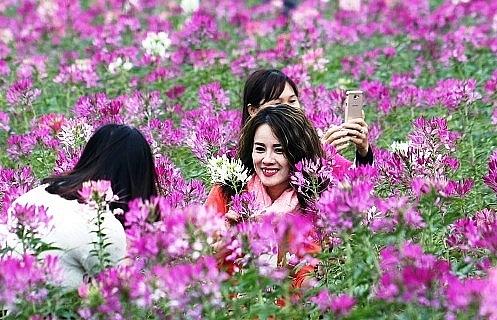 admiring da lats lush spring flower meadows