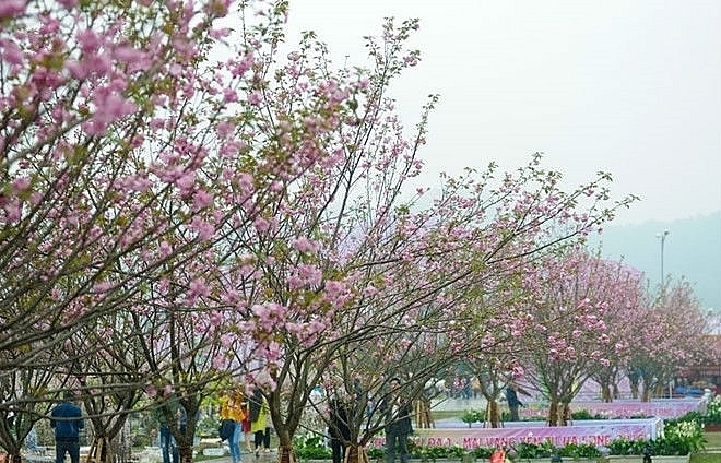 japanese cultural festival to open on march 23