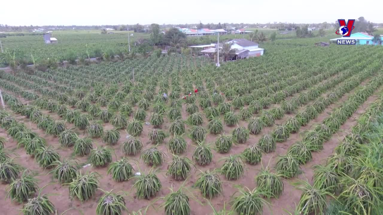 EVFTA smooths the way for Vietnamese farm produce