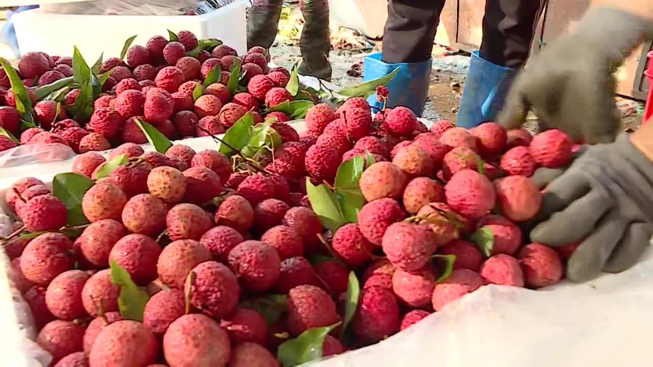 Japan opens door for Vietnamese lychee