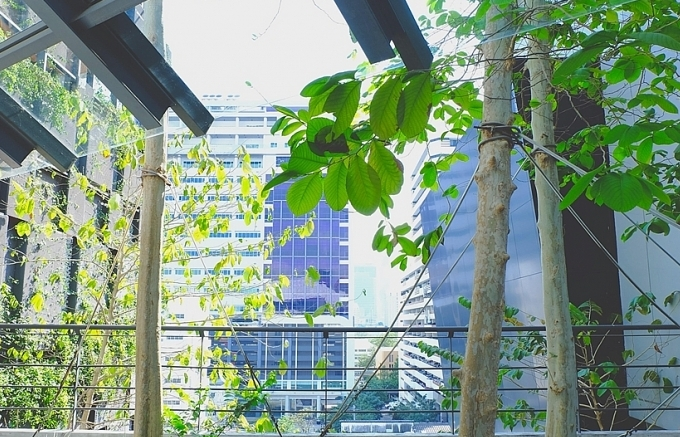 Asia-Pacific cities bring back green patches