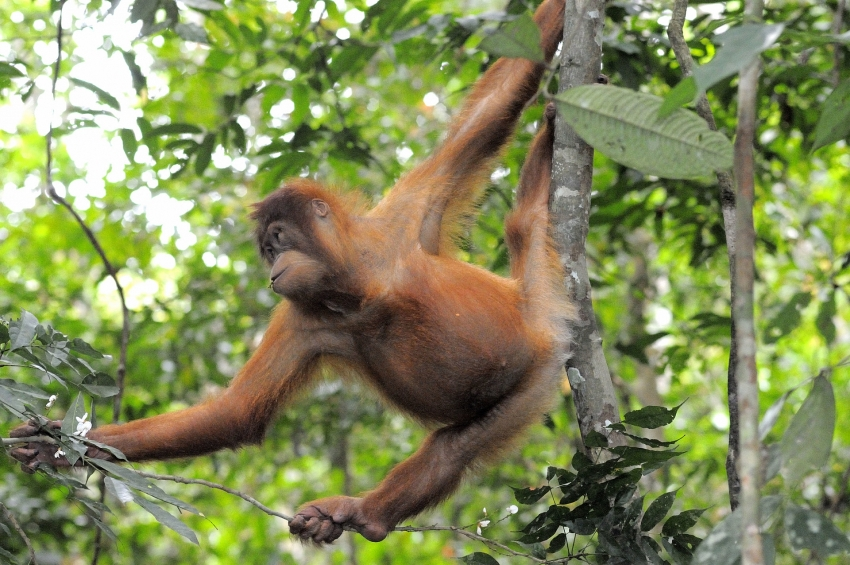 amazon web services joins efforts to protect biodiversity