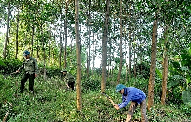 Vietnam approves sustainable forestry development programme by 2025