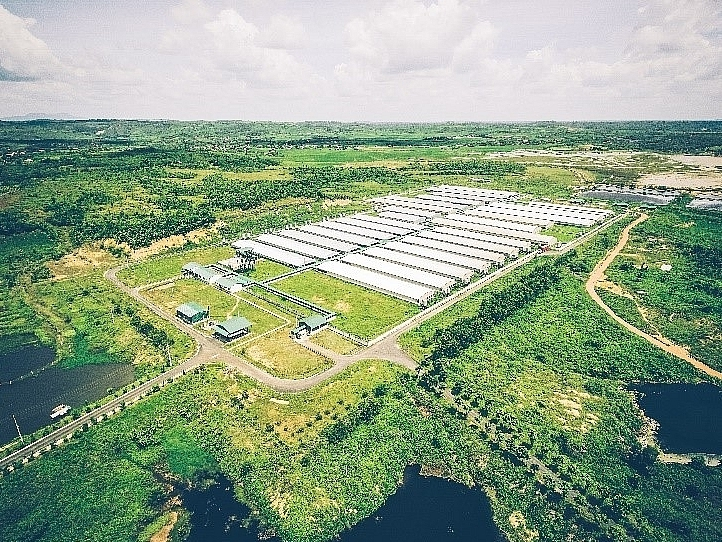 GREENFEED Vietnam exports high-quality breeding stock
