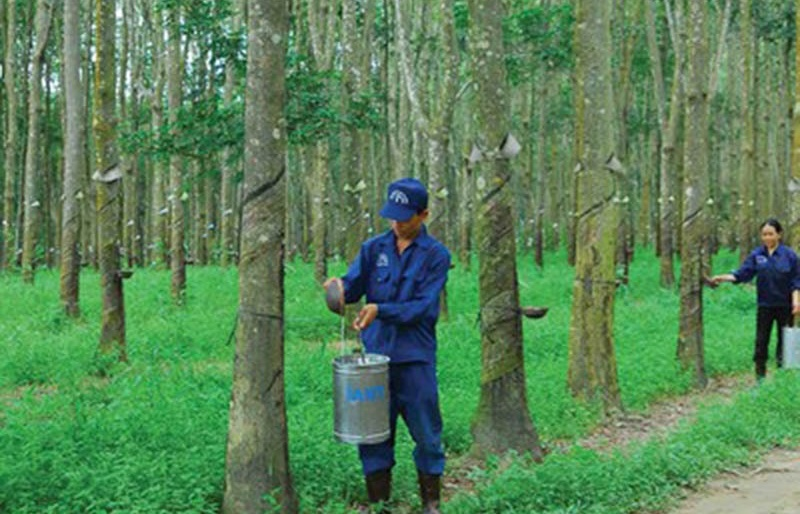 Rubber firms eyeing buoyant performance thanks to favourable export