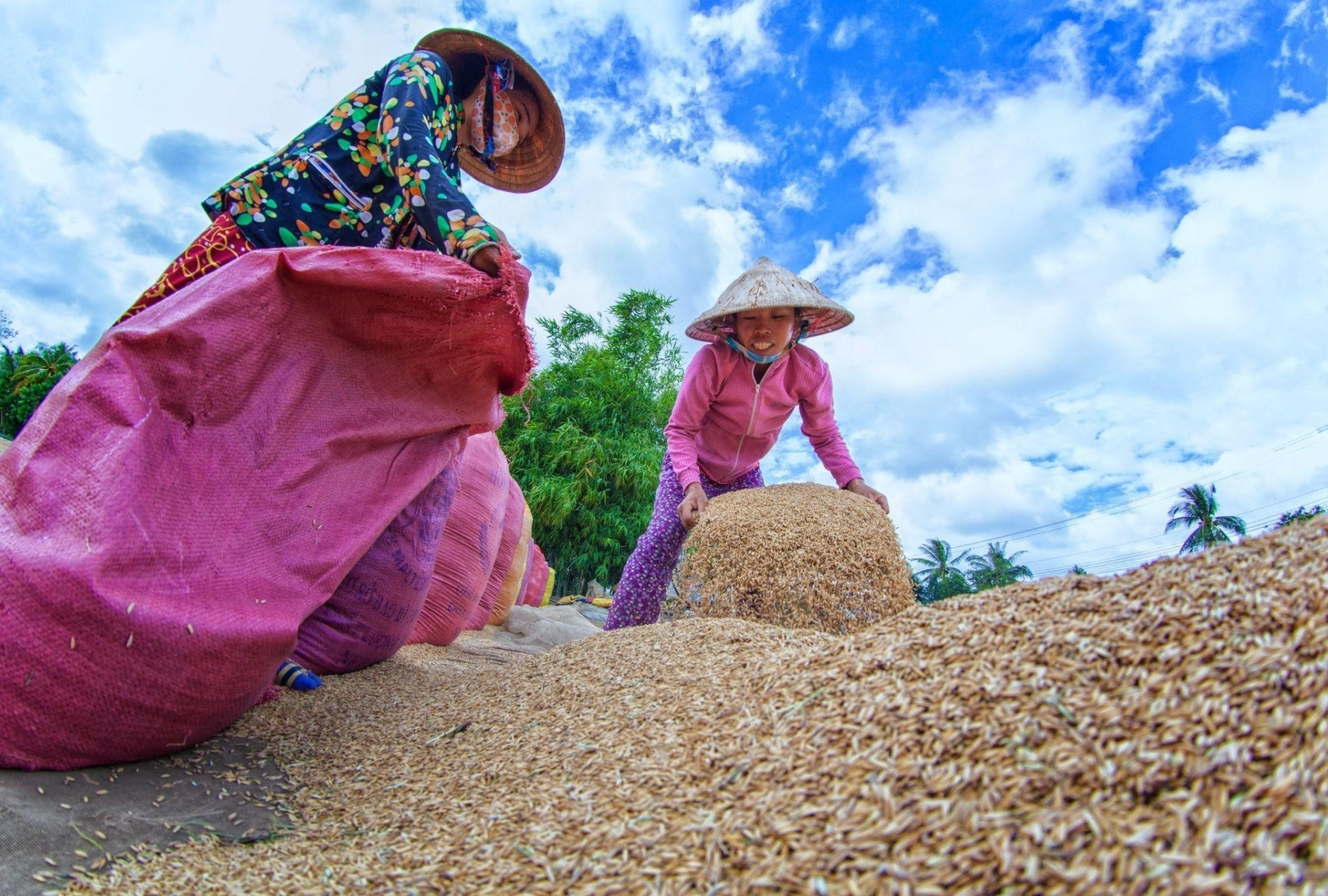 Rice husks: From waste to new green energy