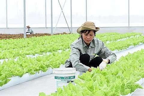 japanese firms eye investing in ha nam