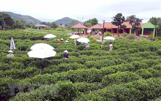 thai nguyen hi tech agricultural zone set up