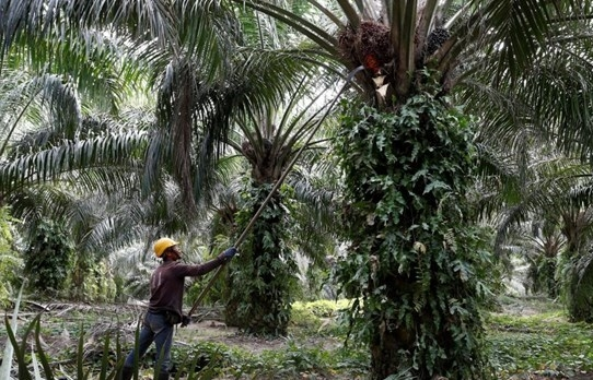 Malaysia files WTO lawsuit against EU on palm-biofuel curbs