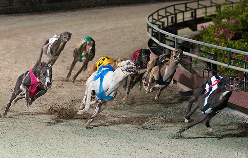 Decree on horse, dog racing, int'l football betting released