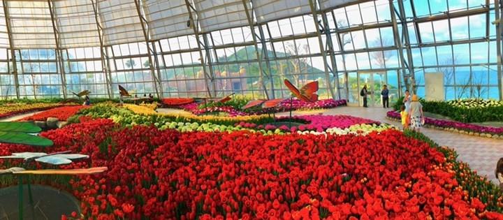 vietnams largest tulip festival in vinpearl nha trang