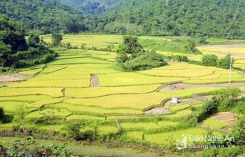 nghe an calls on investment in western area