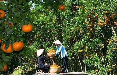 Vinh Long: unique tourism products key to attract visitors