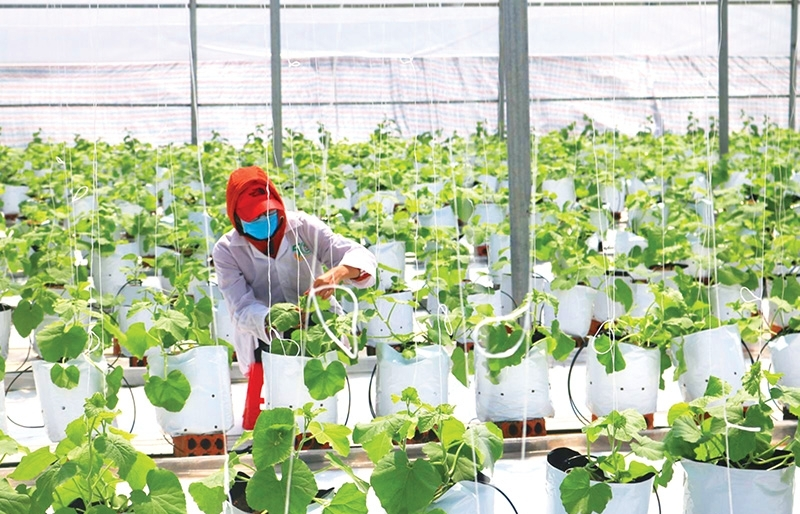 EVFTA helps advance domestic agriculture