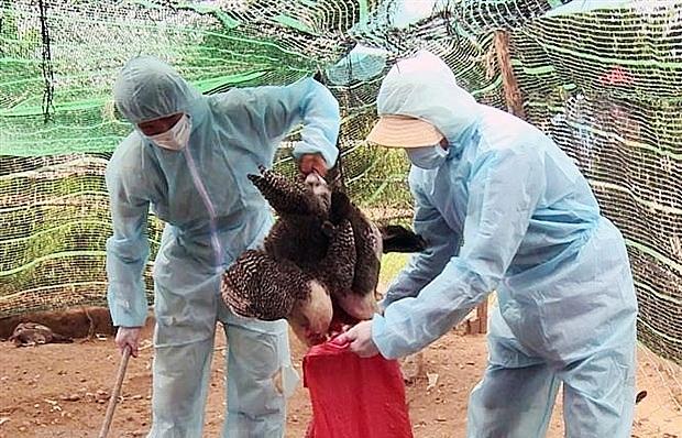 Country shoring up defences amid bird flu concerns