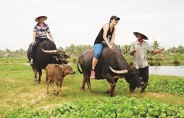 Buffalo tours in Hoi An prove a hit