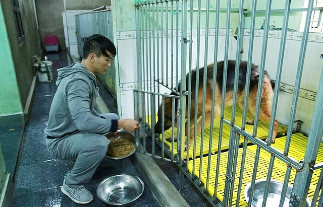Animal lover runs shelter for ill dogs and cats