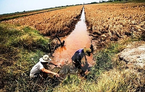Over 40,000ha of rice to be hurt by saline intrusion in Hau Giang