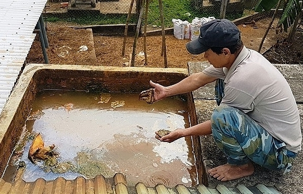 Quảng Nam residents desperate for non-contaminated water
