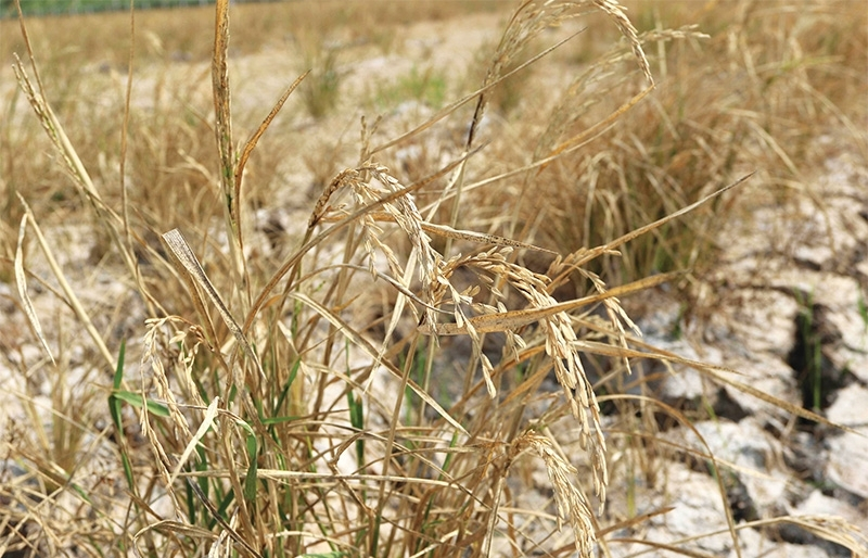 Joint support to fight drought and saltwater threat