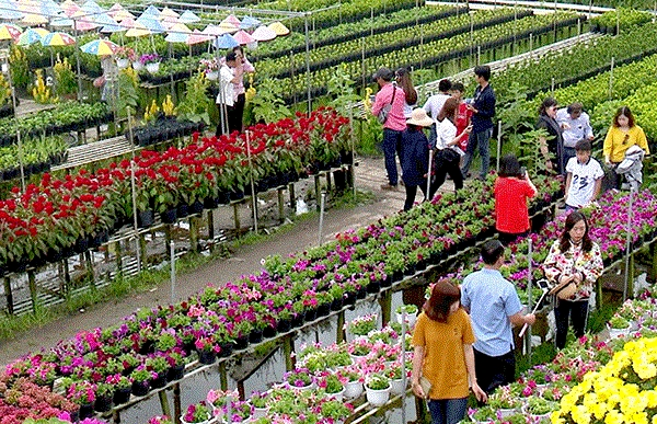 sa dec flower village to be turned into tourism culture centre