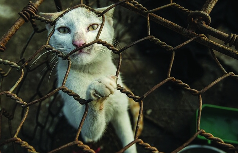 Prohibiting the slaughter of dogs and cats