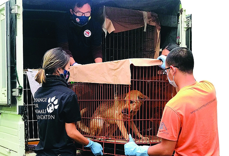 the journey to rescue dogs and cats in vietnam