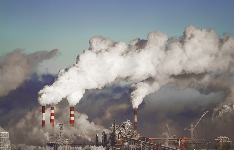 Forests, soil may not keep pace with CO2 emissions, experts warn
