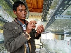 High-tech farming in Dalat