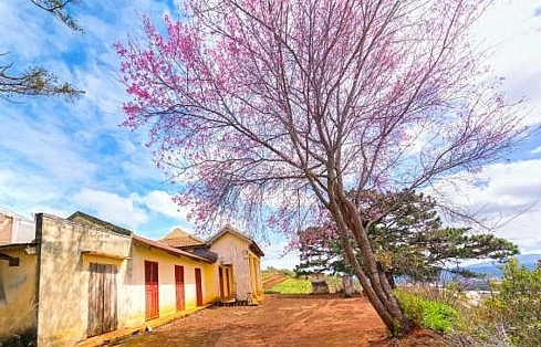 Da Lat and Sa Pa named among best spring destination in Asia