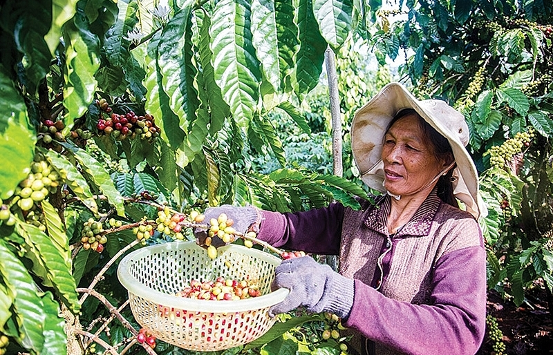 Bayer's contributions to a sustainable Vietnam