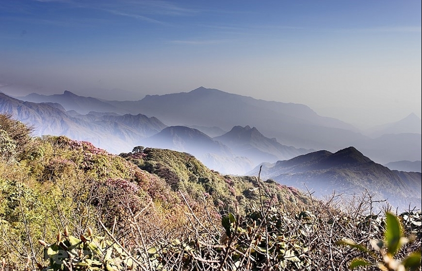flowers bloom on hoang lien son mountain range