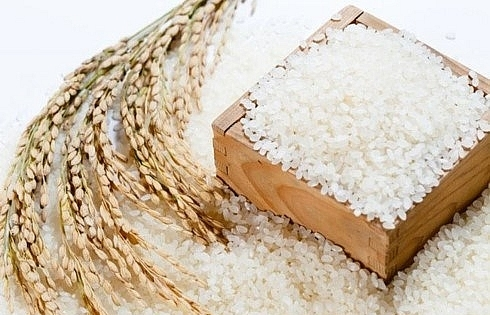 Agriculture ministry proposes maintaining sticky rice exports