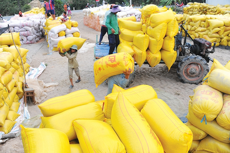 1488 p3 calls for shake up in rice exporting