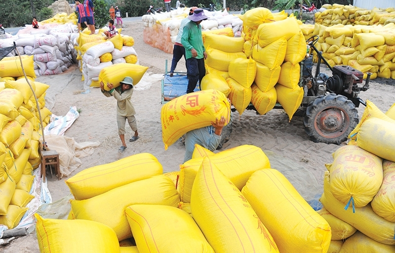 Calls for shake-up in rice exporting