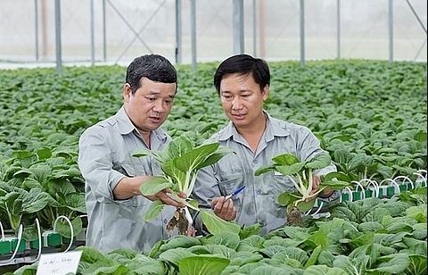 Hanoi seeks investment for 11 farming projects
