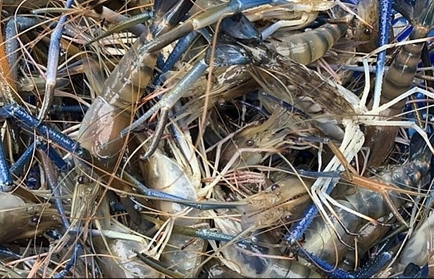 Deadly new seafood virus should be prevented: Ministry
