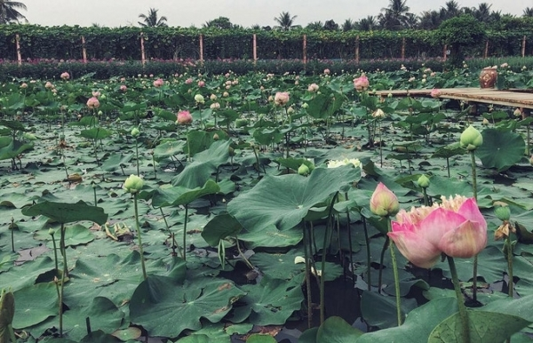visitors buzz around tien giang flower garden
