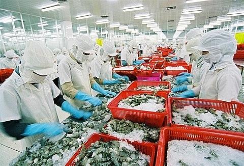 vasep urges govt to protect vietnam shrimp