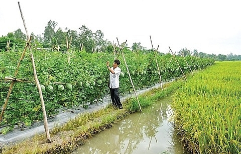 Netherlands keen on farming collaboration with Can Tho