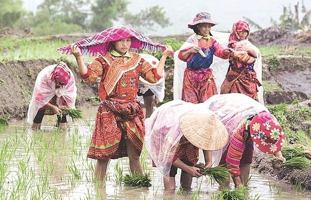 Ha Giang's remote commune to develop eco-toursim
