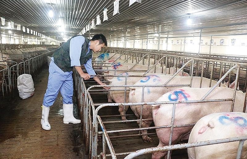 Farms under threat as ASF fails to ease