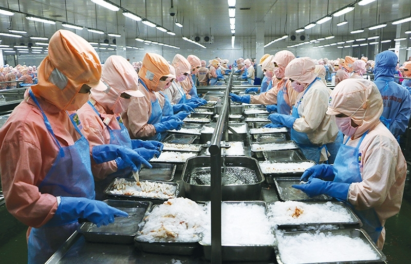 Shrimp leading the charge in seafood sector recovery