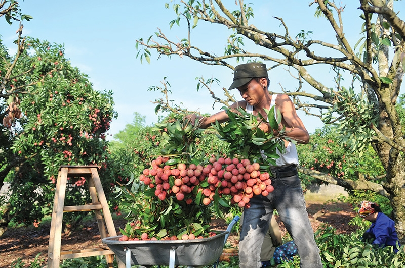 Deeper funding key for agri-processing